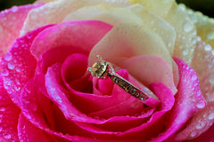 Diamond golden ring on the rose petals, Valentine& x27;s Day present Stock Photos