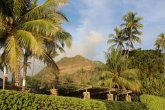 Diamond Head & palmträd Arkivbilder