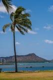 Diamond Head Waikiki med palmträd Oahu Royaltyfri Fotografi