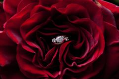 Diamond Red Rose images stock