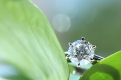 Diamond ring Stock Image