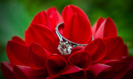 Diamond Ring Photos stock