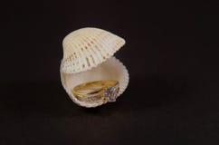 Diamond Ring dans le coquillage image libre de droits