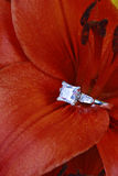 Diamond ring in flower Stock Photography