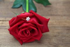 Diamond ring  hidden in red rose petals. Diamond wedding ring  hidden in red rose petals with water drops on wooden background. Love, Married and Valentine Stock Image