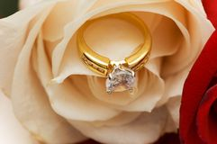 Diamond ring between the petals. Of white rose Royalty Free Stock Image