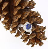 Diamond ring on pine cone Stock Image