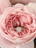 Diamond ring in pink rose. Diamond princess cut engagement ring in an English rose, Queen of Sweden Stock Images