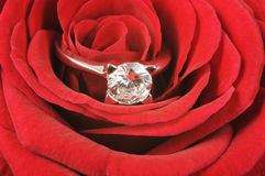 Diamond ring on red rose. Diamond wedding ring on red rose close up Royalty Free Stock Images