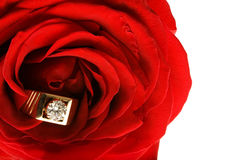 Diamond Ring in a Red Rose Stock Images