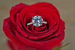 Diamond ring in red rose. Close up of a diamond ring in a red rose Stock Photo