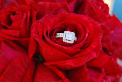 Diamond ring in red roses Stock Image