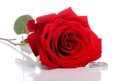 Diamond Ring and Rose Royalty Free Stock Images