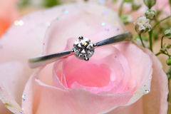 Diamond Ring On Rose Royalty Free Stock Images