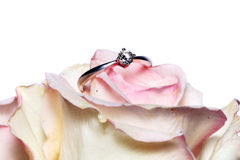 Diamond Ring On Rose Stock Photos