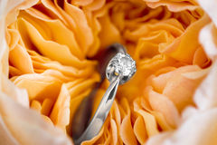 Diamond ring in a rose Stock Photos