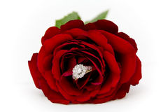Diamond Ring in a Rose Royalty Free Stock Photo