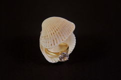 Diamond Ring in seashell Royalty Free Stock Images
