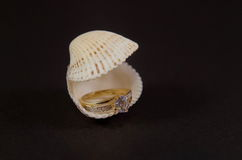 Diamond Ring in seashell Royalty Free Stock Image