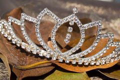 Diamond Tiara On en säng av bruna Autumn Leaves Royaltyfri Bild