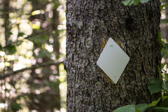 Diamond Trail Blaze na árvore Foto de Stock Royalty Free