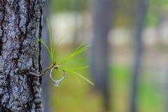 Diamond Wedding Ring en la rama de árbol para casarse el co Fotografía de archivo