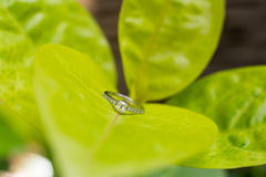Diamond wedding ring Stock Photography