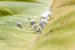 Diamonds. On the green leaf Stock Photos