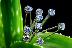 Diamonds on greenery Royalty Free Stock Photography