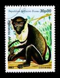 Diana Monkey (Cercopithecus diana), djurserie, circa 1983 Arkivbild