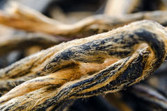 Dianhong tea is a type of relatively high end gourmet Chinese black tea. Macro. Under a microscope. Stock Image