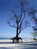 Diani Beach Genral View Stock Images