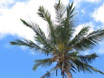Diani-Strand-einzelne Palme-Ansicht Stockbild