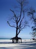 Diani-Strand Genral-Ansicht Stockbilder