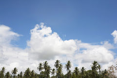 Diani strandpalmträd Royaltyfria Bilder