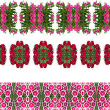 Dianthus flower  background Stock Images