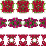 Dianthus flower  background Royalty Free Stock Photos