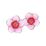 Dianthus flower Royalty Free Stock Images