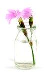 Dianthus jar Stock Image