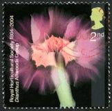 Dianthus UK Postage Stamp Royalty Free Stock Photo