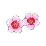 Dianthusbloem Royalty-vrije Stock Afbeeldingen