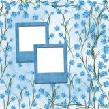 Diapositivas para las fotos con las orquídeas azules Imagen de archivo