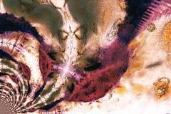 Diapositive en couleurs brûlée Photo libre de droits