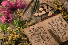 Diary with drawings of magic and healing herbs, spring flowers and runes. Occult, esoteric and divination still life. Halloween background with vintage objects stock photography
