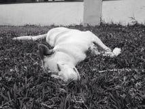 Dias de cão Foto de Stock Royalty Free