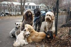 Dias de cão Imagens de Stock Royalty Free