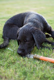 Dias de cão do verão imagens de stock royalty free