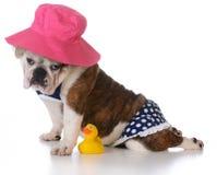 Dias de cão do verão Foto de Stock