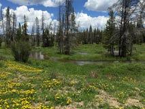 Dias de Colorado fotos de stock royalty free