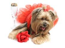 Dias do vinho & das rosas Imagem de Stock Royalty Free